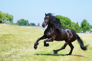 Pferd_DSC6744