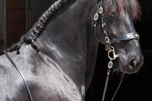 Pferd_DSC7047