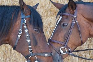 Pferd_DSC7106