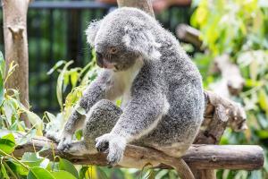 Zoo_DSC1848